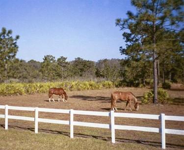 A pair of horses graze in a Prairie Creek West pasture